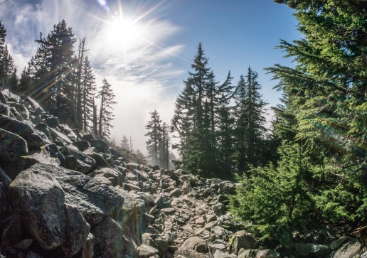 Trail to Mt. Pilchuck.